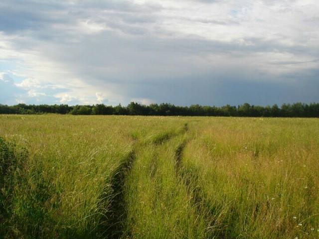 Сено из травы люцерна - Изображение 1