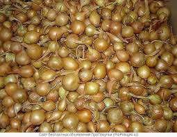 Продажа лука-севок сортов: штутгартен, ред барн, сноубол оптом от 40 кг - Изображение 4