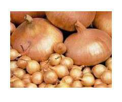 Продажа лука-севок сортов: штутгартен, ред барн, сноубол оптом от 40 кг - Изображение 2