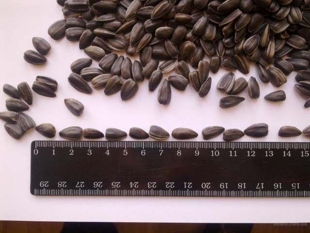 Продам посевной материал пшеницы, ячменя, кукурузы, сои, гречки, подсолнух - Изображение 4