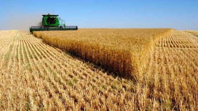 Продам посевной материал пшеницы, ячменя, кукурузы, сои, гречки, подсолнух - Изображение 6