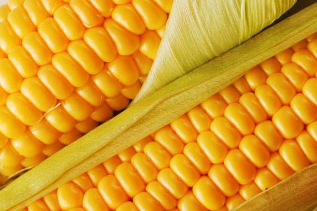 Продам посевной материал пшеницы, ячменя, кукурузы, сои, гречки, подсолнух - Изображение 3