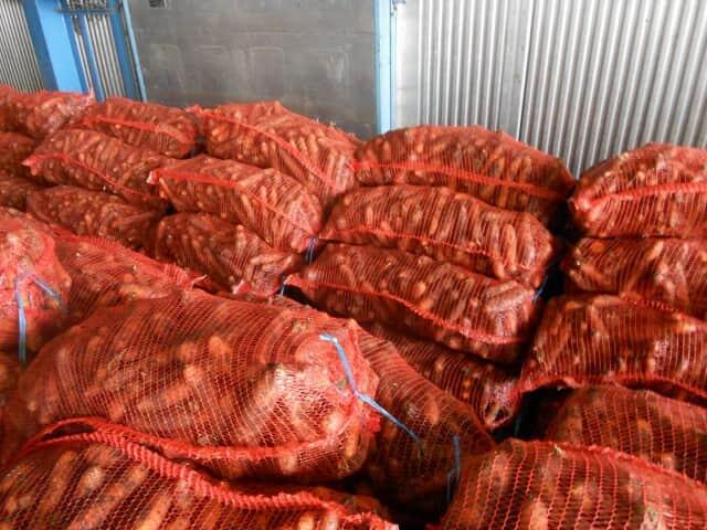 Продам морковь - Изображение 2