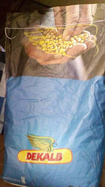 Подсолнечник . кукуруза семена . Распродажа - Изображение 2